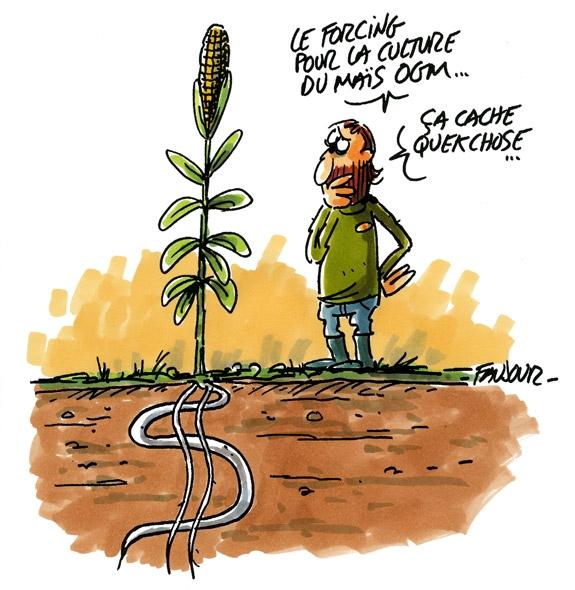 racines OGM Dollar